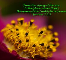 psalms 113:3 by tonysphotospot