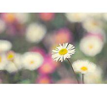 Daisy Bokeh Photographic Print