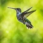 Hummer by J. Day