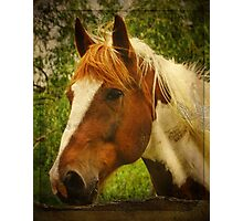 Horse at the Fence Photographic Print