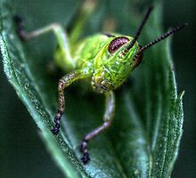 Little Green Grasshopper by EelhsaM