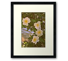 Sweetest Bloom Framed Print