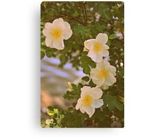 Sweetest Bloom Canvas Print