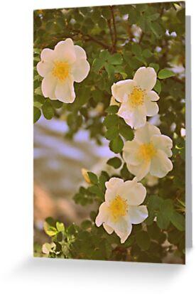Sweetest Bloom by BirgitHM
