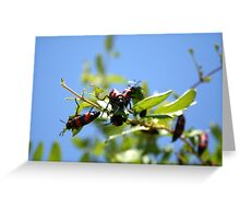 Blister Beetle Insect Invasion on Honeysuckle with Blue Sky Greeting Card