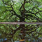Angel Oak by BrianDawson