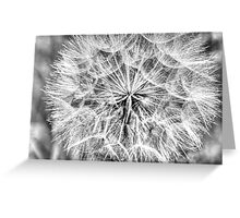 Dandelion in B/W Greeting Card
