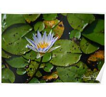 Lavendar Water Flower Poster