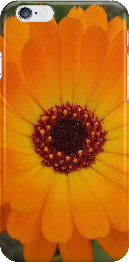 Orange Husbandman's Dial Marigold Flower by taiche