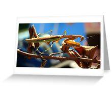 Praying Mantis on a Stick Greeting Card