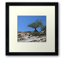 Tough Tree Framed Print