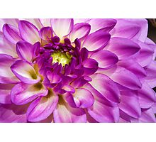 One More Dahlia Photographic Print