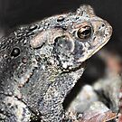 Toad in a Hole                                                                                                                                                                        by Sheri Nye