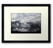 Drive By Trees Framed Print