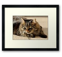Catchin the Rays Framed Print
