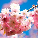 Spring Blossom. by LittlePhotoHut
