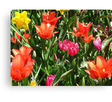 The exciting colours of May Canvas Print