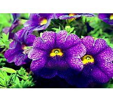 Especially purple Photographic Print