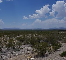 Panther Junction to Marathon - Through the Plains - Big Bend National Park in June by seymourpics