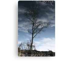 Tree Reflection Canvas Print