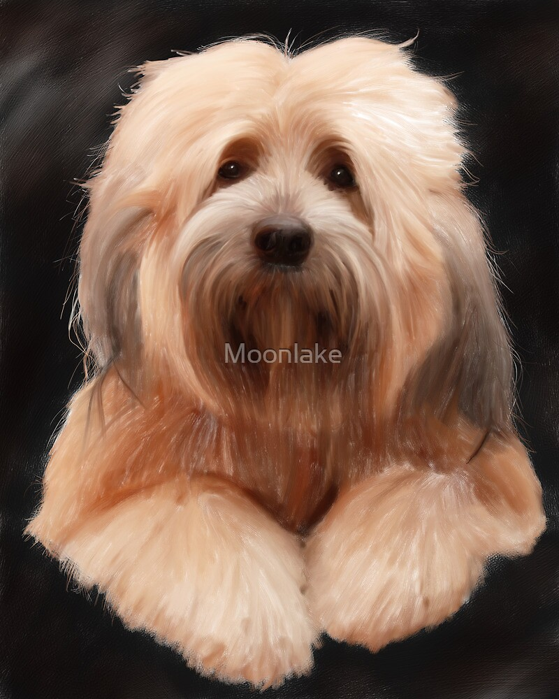Tibetan Terrier by Moonlake