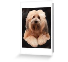 Tibetan Terrier Greeting Card