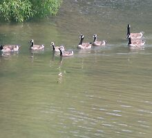 Momma Goose and her lineup by PicsbyJody