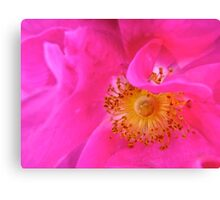 Governor General's Rose #1 Canvas Print