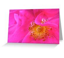 Governor General's Rose #1 Greeting Card