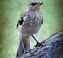 Texas State Bird~Mockingbird by Penny Odom