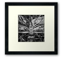 Black and White Dragonfly Framed Print