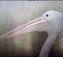 Pelican Profile by Clare Colins