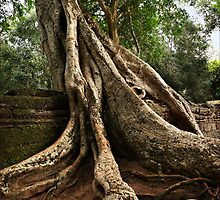Cambodia - Angkor - Ta Prom  #02 by Malcolm Heberle