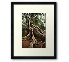 Cambodia - Angkor - Ta Prom  #02 Framed Print
