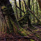 The clearest way to the Universe is through a forest wilderness by Mel Brackstone