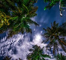 Tropical Night Sky by JennyRainbow