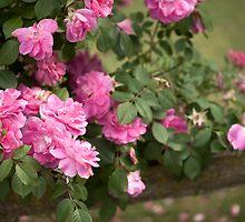 ...rose scent....... by Jane Anastasia Studio