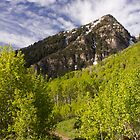 Forest on the Alpine Loop Utah by Alan Mitchell
