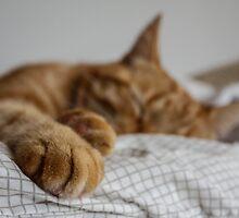 Sleeping cat by Xenne
