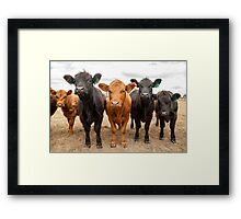 Five Cows Framed Print