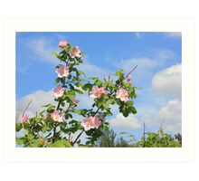 Wild Roses in June Art Print