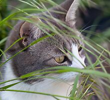 Stalking Cat by Imager