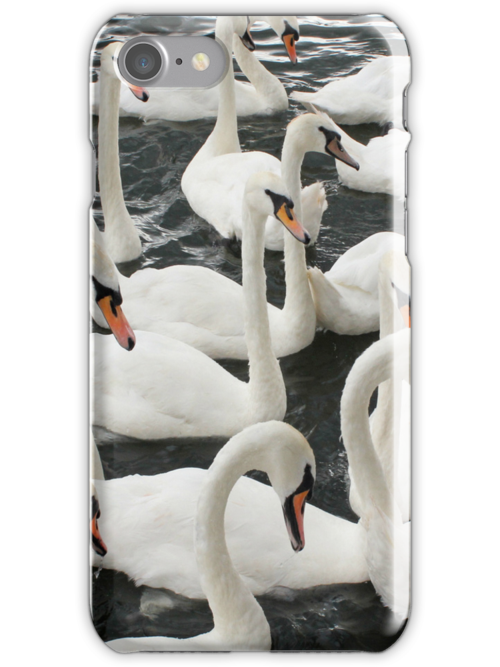 A Bevy of Swans by LittlePhotoHut