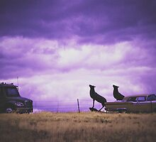 infrared scenery by Paula Burgoon