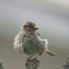 WILD BIRDS by Lorelle Gromus