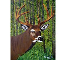 Buck by the forest Photographic Print