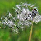 Fly Me Away by Sheri Nye