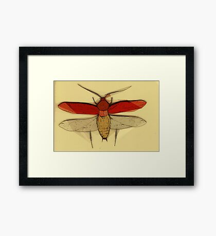 Insect Print 2 Framed Print