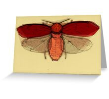 Insect Print 4 Greeting Card