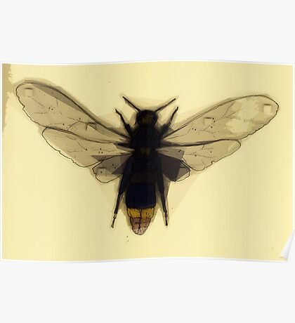 Insect Print 5 Poster